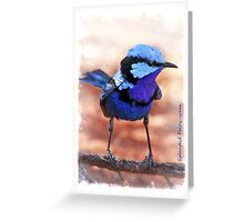 Splendid Fairy-wren Greeting Card