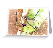 Purple-crowned Fairy-wren Greeting Card