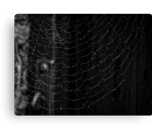 Clever Mr Spider Canvas Print