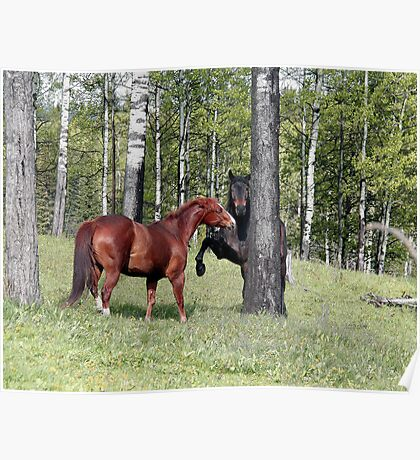 Percheron Horse being scolded by Guardian Mare Poster