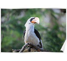 Perfect Bird Collection #3 - Tropical Bird Poster