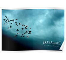 Flock in Flight Poster
