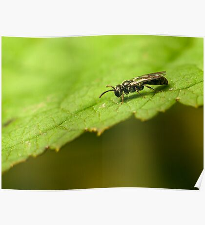 small bee on a green leaf Poster