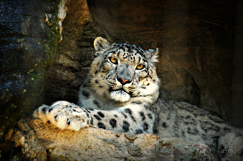 ~Snow Leopard~ by a~m .