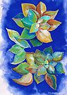 Echeveria - art by Elizabeth Kendall