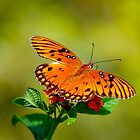 Butterfly Hanging Out by TJ Baccari Photography