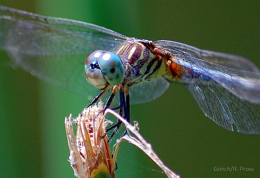 Up  Close & Personal by Grinch/R. Pross
