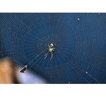 Little Green Spider Photographic Print