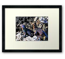Galapagos Marine Iguana Buddies Framed Print