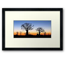 Boab Silhouettes (Panorama) Framed Print