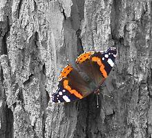Bark and Butterfly by davidandmandy