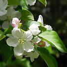 Blossom Time by Martha Medford