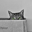 Cat in the box by © Kira Bodensted