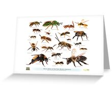 Beautiful Bees of Eastern North America Greeting Card