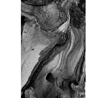 Driftwood Black and White Close Up Photographic Print