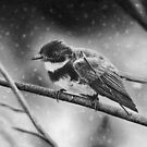 Bird in Winter by artddicted