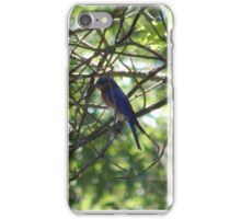 Perfect Bird Collection #11 iPhone Case/Skin