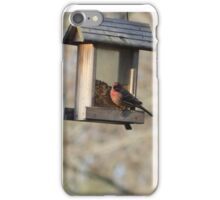 Perfect Bird Collection #8 iPhone Case/Skin