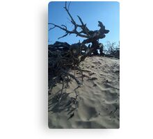 Dunes and Brush Canvas Print