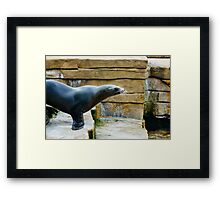 Sea Lion Side View Framed Print