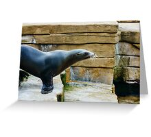 Sea Lion Side View Greeting Card