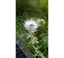Bee in Thistle Photographic Print