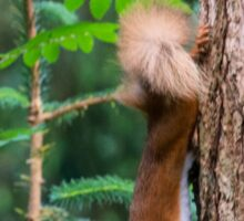 Red Squirrel Sticker