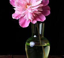 Pink Peony Flower and Vase by Edward Fielding