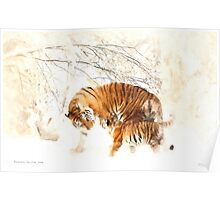 Tigers in the Snow Poster