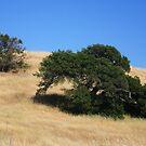 CALIFORNIA GOLD by fsmitchellphoto
