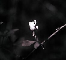 Forest Rose by brodrickmade
