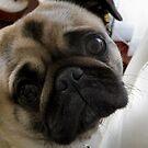 Pug Love by Bill Lighterness