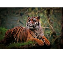 Tiger Beauty Photographic Print