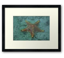 Starfish in the Lagoon, #redbubble, #nautical, #ocean, #photo Framed Print