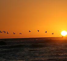 Bird Sunset Silhoutte by izzynesci