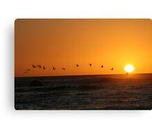 Bird Sunset Silhoutte Canvas Print