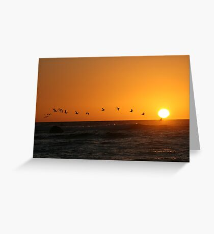 Bird Sunset Silhoutte Greeting Card