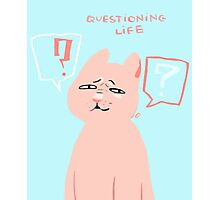 Questioning life cat Photographic Print