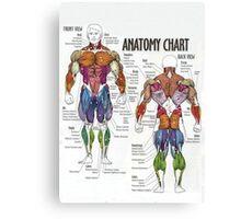 Muscle Anatomy Chart Canvas Print