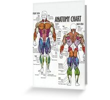 Muscle Anatomy Chart Greeting Card