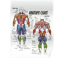 Muscle Anatomy Chart Poster