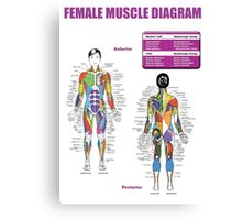 Muscle Anatomy Diagram (Female) Canvas Print