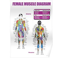 Muscle Anatomy Diagram (Female) Poster