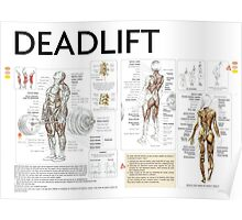 Barbell Deadlift Exercise Diagram Poster
