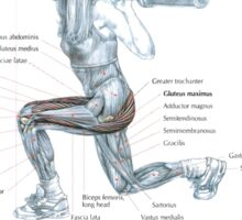 Lunge Exercise Anatomy Sticker