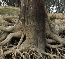 exposed roots by ndarby1