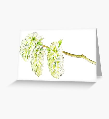 Green willow catkin watercolor painting Greeting Card