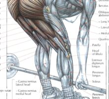 Barbell Stiff-Legged Deadlift Diagram Sticker