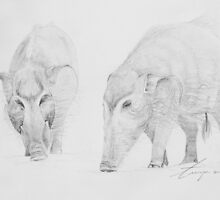 Red River Hogs by tanyadann