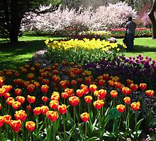 Tulip Time in Australia 9 Photograph by Heatherian by Heatherian